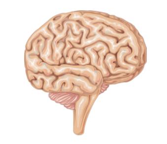 PMT 337 : Psychomotricité et neuropsychologie : complémentarités