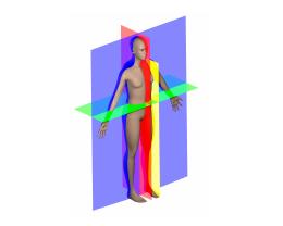 PP 519 : Quand le geste est perturbé ; Troubles des Coordinations – Dyspraxies